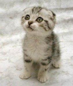 cute-cat2
