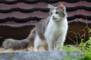 kucing-berhaji-2