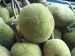 buah Terap