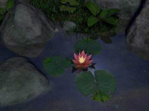 water_lily a