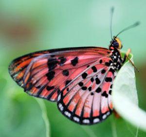 serangga-kupu2(gettyimages)