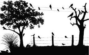 siluet burung