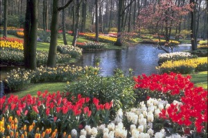Taman-bunga