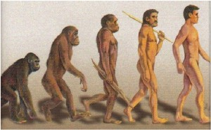 darwin-proses-evolusi-manusia