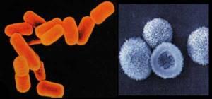 e_coli1_en